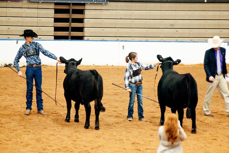 american_royal_cattle-7.jpg