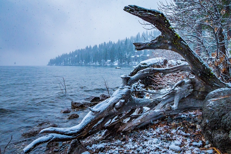 Tahoe in snow driftwood.jpg