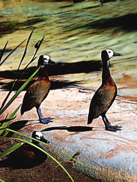 T_3 Ducks.jpg