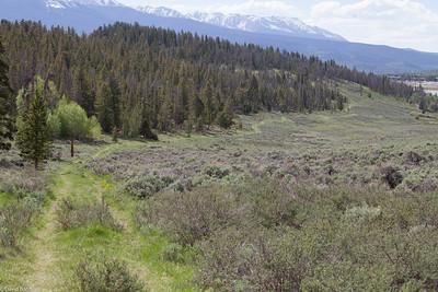 High Meadow