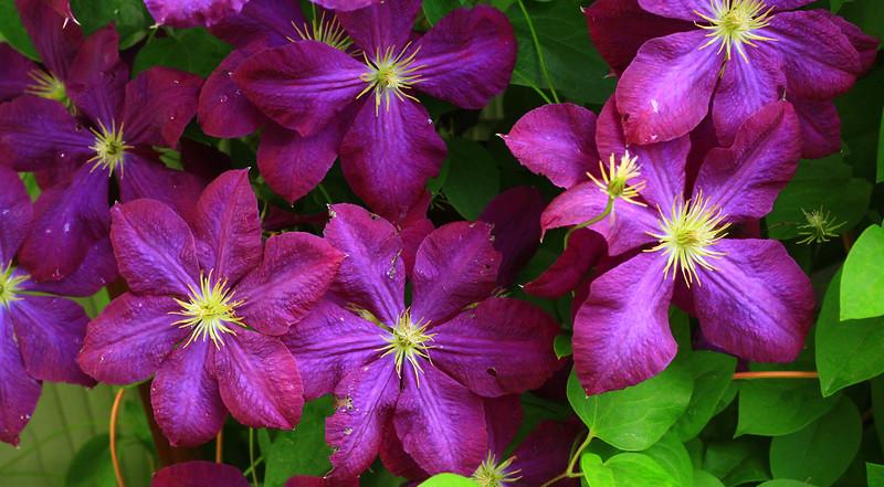 debbies flowers 2019-1343-2.jpg