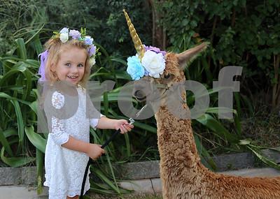 Emma & Mila Alpaca