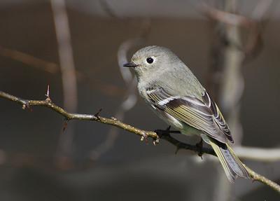 Bird photos.