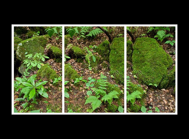 ForestTriptych.jpg