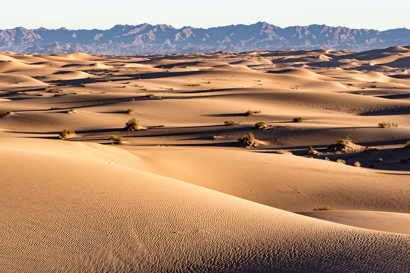 Sand dunes with sparse vegetation expand almost to the horizon before meeting the Chocolate Mountains of California