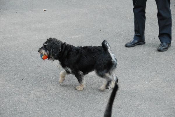 2009-09-03 Lewis Morris Dog Park