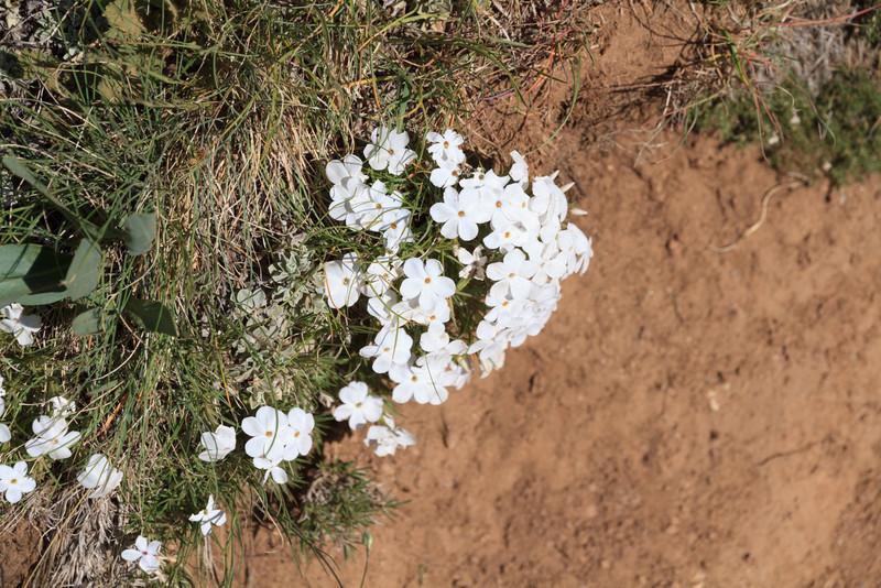 2011_07_03 Wyoming 253.jpg