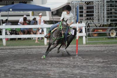 2012 Horses