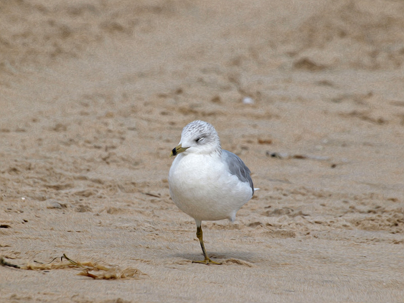 seagullpainting.jpg