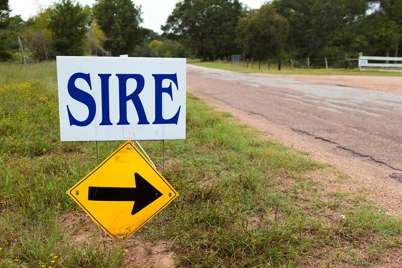 SIRE Ride-a-thon 2013-5875.jpg