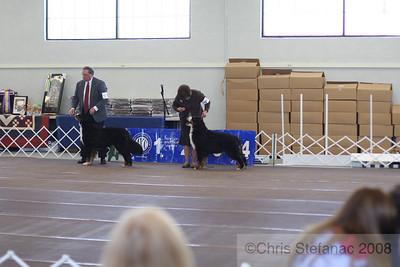 Sweeps 9-12 mos Dog-PV 09