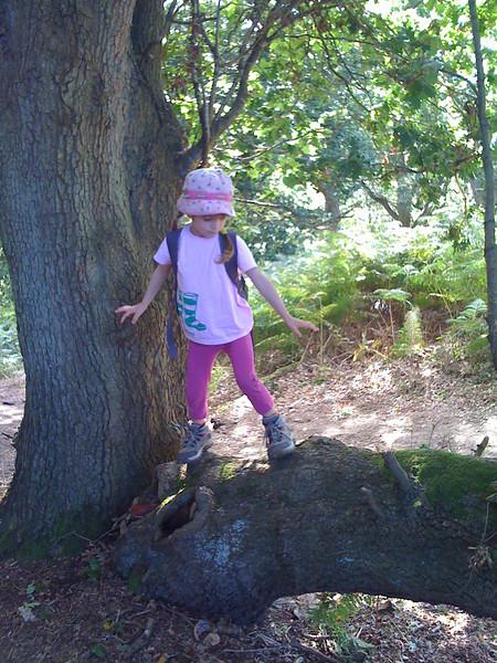 Branch climbing