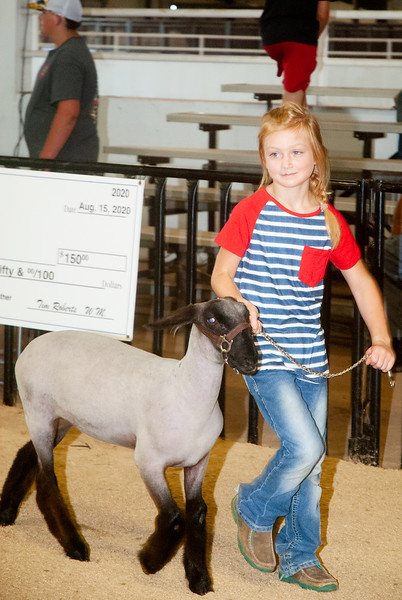 Washington Masonic Sheep Show
