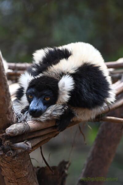 Madagascar 2017 (32)
