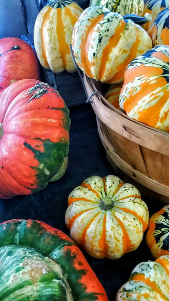 Colorful Gourds