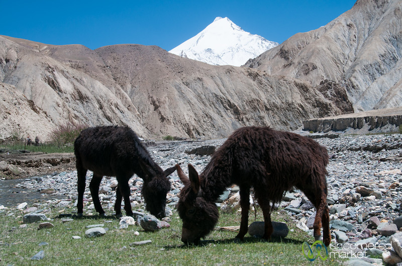 Donkeys Graze in the River Valley - Markha Valley Trek, Ladakh