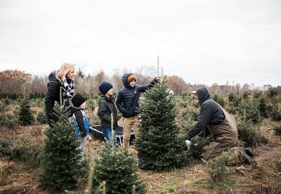 Michigan Christmas Trees