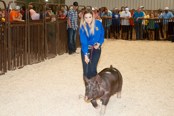 OK State Fair Swine