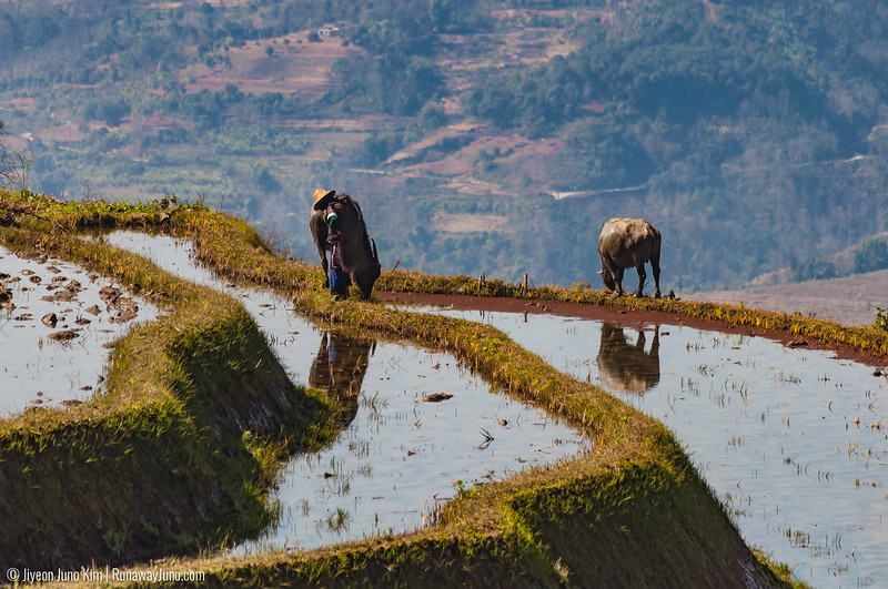 Rice Terraces-5050.jpg