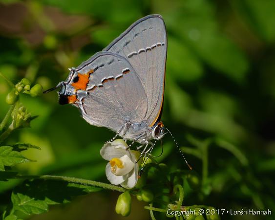 Hugh Ramsey Nature Park - Harlingen, TX