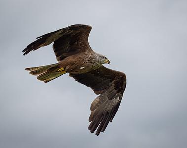 Hawk Conservancy Reopens