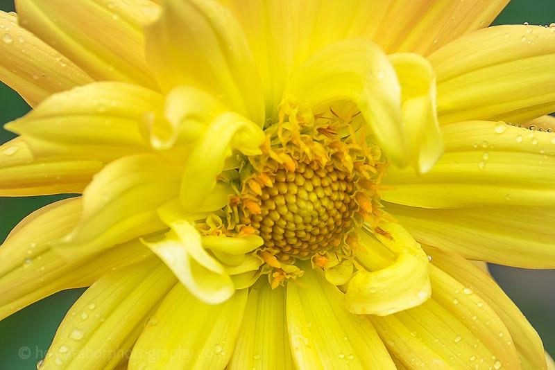 Louise's flower close-ups-6.jpg