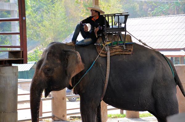 Maetaeng Elephant Park, Chiang Mai, Thailand (March 2017)