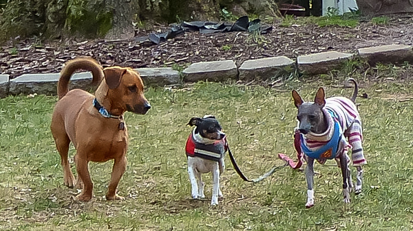 2018-12-25 Shorty, Oreo, Alfie, and Morgan