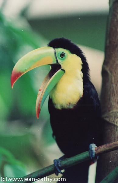 Costa Rica 2007_ (3 of 85)