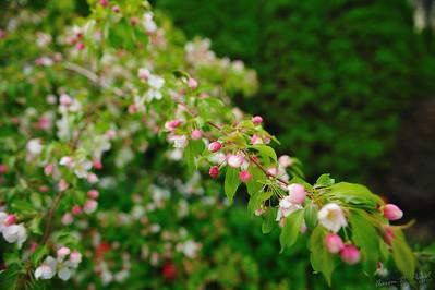 Ecotat Gardens and Arboretum