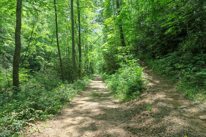 Forest Road 142 @ Fletcher Creek Trail -- 2,430'