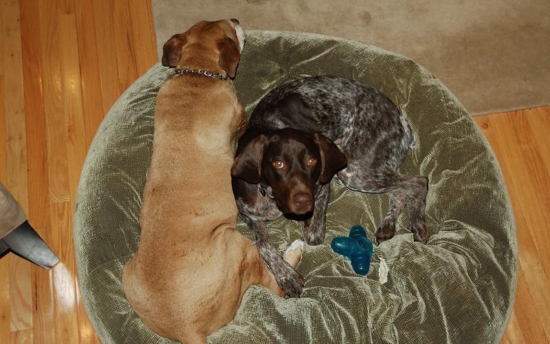 Moe & Morgen on dog bed 2.jpg