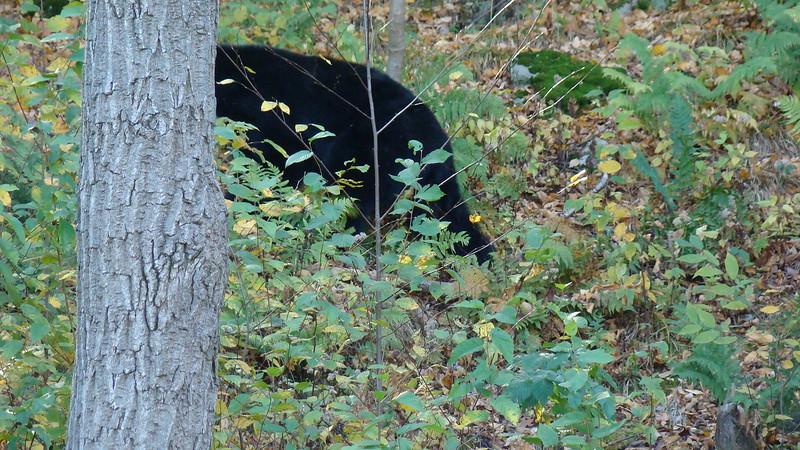 App.Trail Fall 2008,Fl. Maine 239.JPG