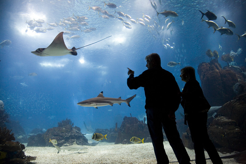 People admiring sea animals in the main tank of Lisbon Oceanario