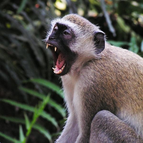 PICT0665_Mombasa_upr1c.jpg