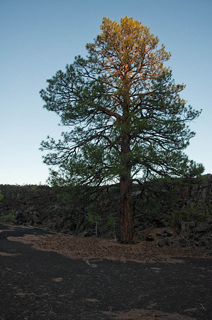 Sunset Crater, in AZ