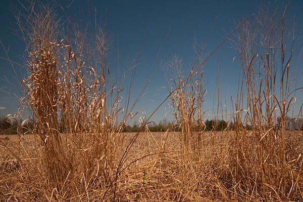 Thoreau Farm & Contemplative Photography