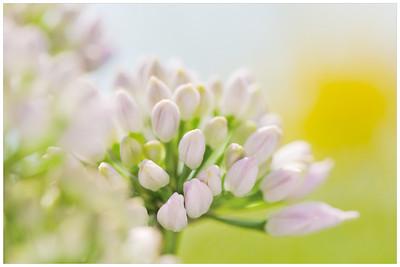Garden Flowers CloseUp, Macro