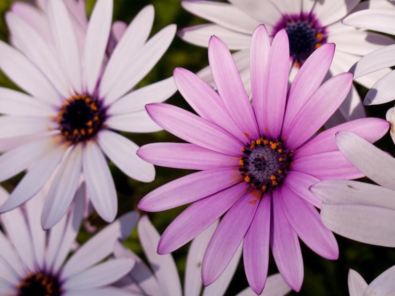 mar7_flower.jpg