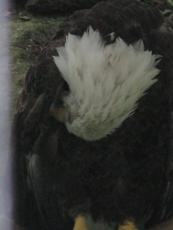 2009 Philadelphia Zoo II
