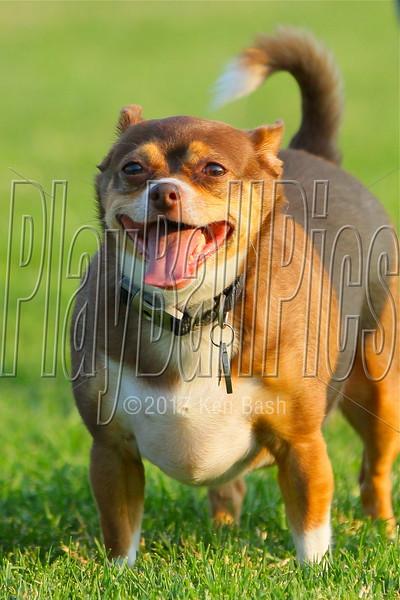 Springville Dog Park 6/30/13