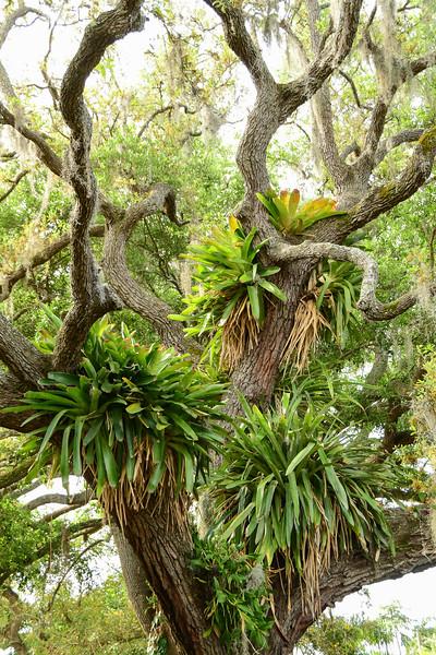 Selby Gardens, Sarasota, FL - Terry's
