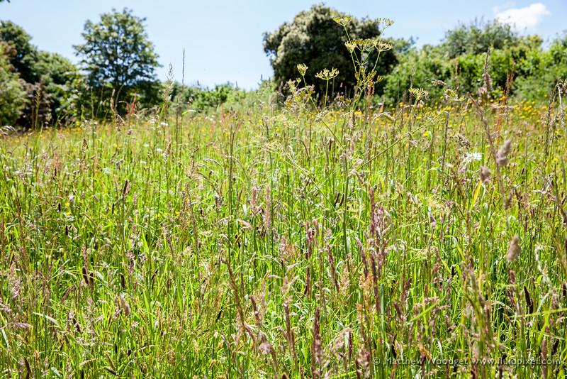 Woodget-140612-059--countryside, Field, Summer.jpg