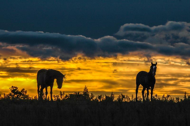 Wild Horses Under Sunset Sky #2