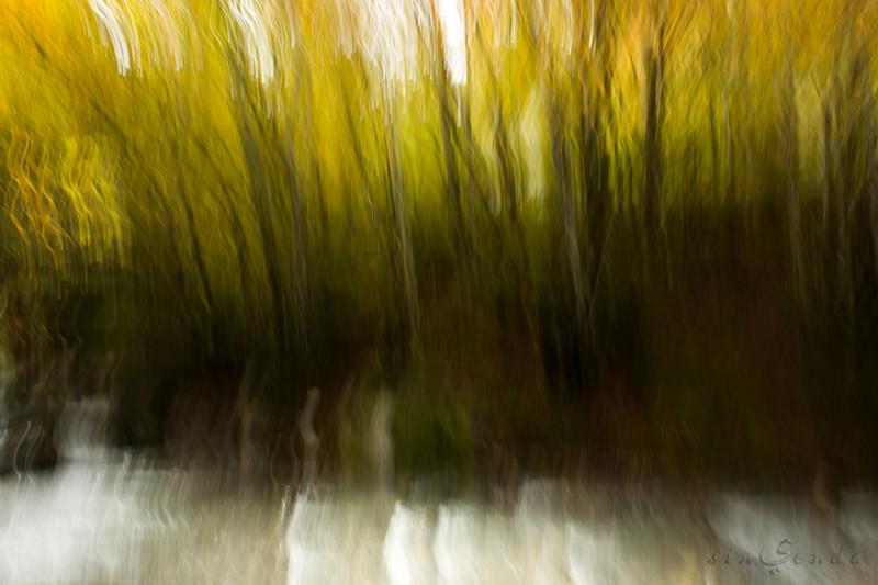 Espíritus del bosque. Landrosque