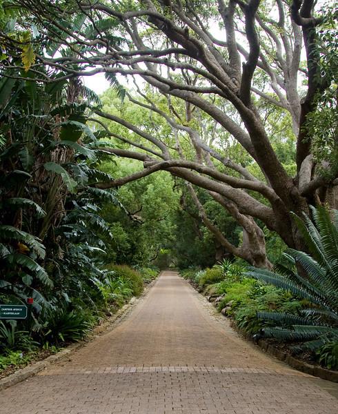 Cape Town - Kirstenbosch