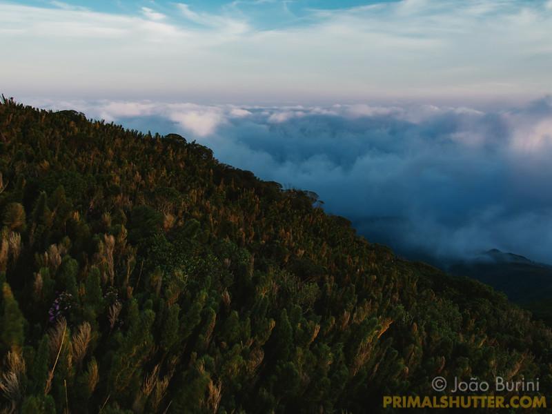 Rocky outcrop vegetation