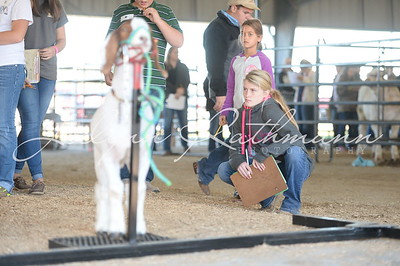 Livestock Judging and BCF Exhibitor Awards