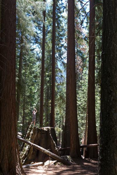 Sequoia_0163.jpg
