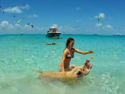 bahamas-swimming-pigs4.jpg